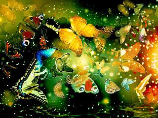 Many-colorful-butterfly-in-scene-photo-image-HD-wallpaper.jpg