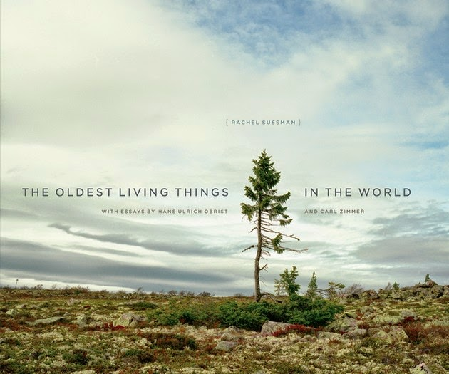 photographer Rachel Sussman oldest living things-2