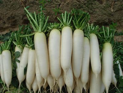 Chữa bệnh đường hô hấp với củ cải trắng