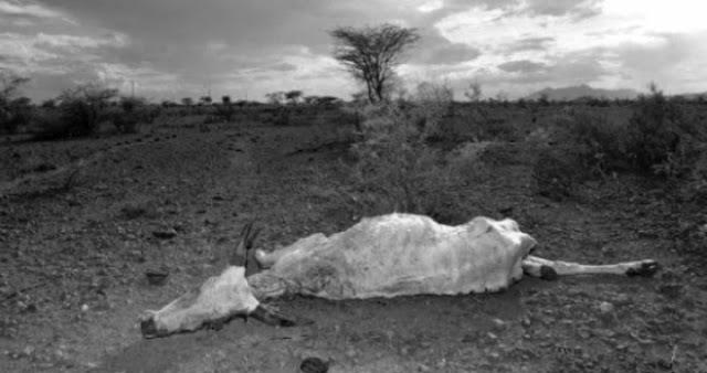15 millones de personas viven afectadas por la hambruna en el Sahel
