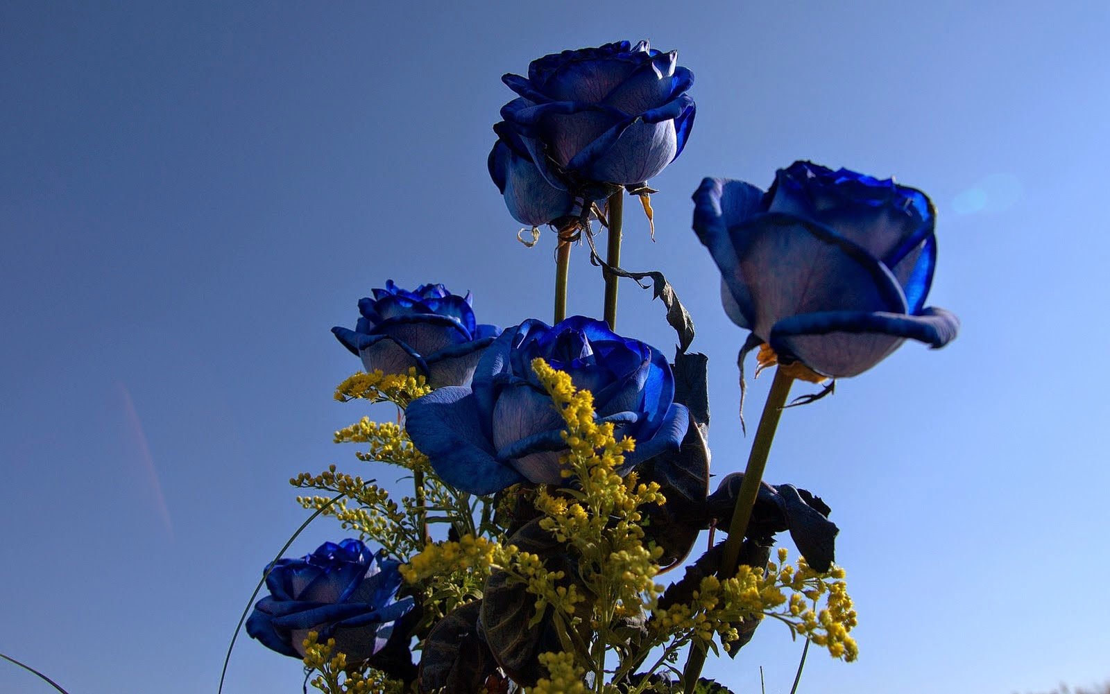 Beautiful Blue Flowers Wallpapers