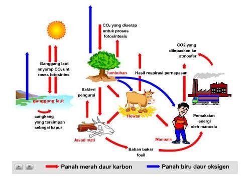 Peran Komponen Ekosistem dalam Aliran Energi dan Daur Biogeokimia