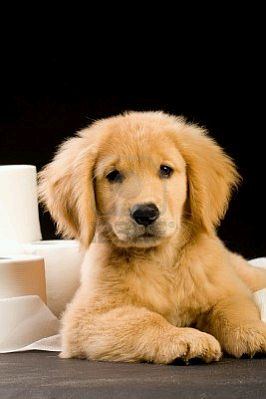 Pet Dog  Worksheet  Educationcom