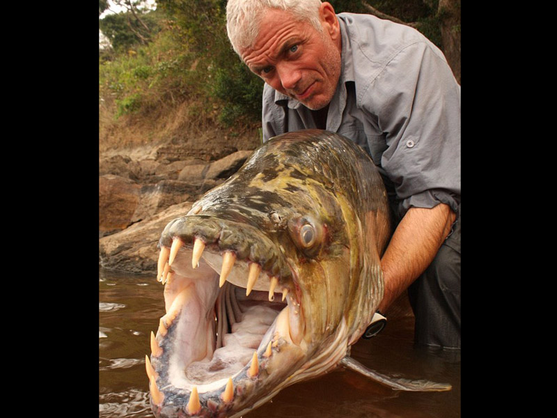 River Monsters Tiger Fish