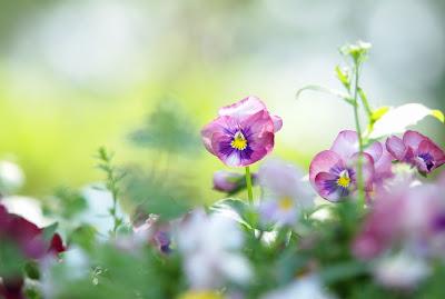 15 arreglos florales para el Día de las Madres - 10 de mayo