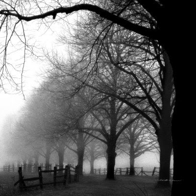 Black And White Foggy Trees Picture