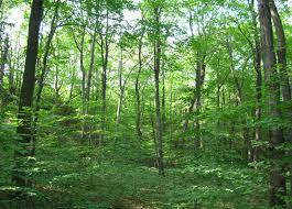 随机森林及其副产品