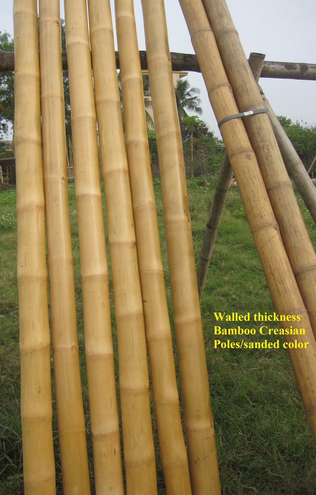 Best bamboo cane pole stake all decor ideas for fences for Uses for bamboo canes
