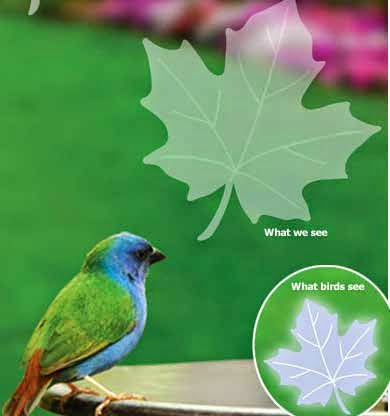 Easy Steps To Prevent BirdWindow Collisions At Home And Work - Window stickers to deter birdsstickers to prevent birds flying into windows popular bird