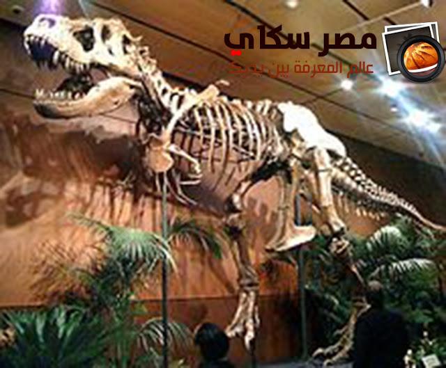 ماهو مفهوم الحفريات المتحجرة Petrified fossils  ؟