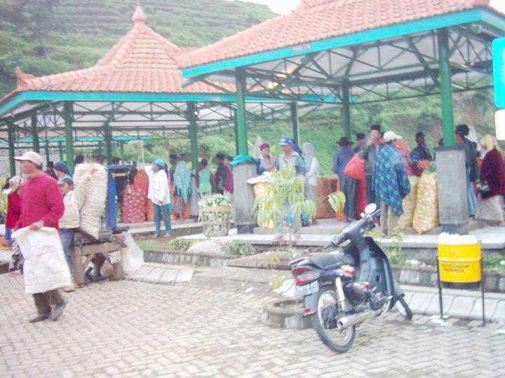 SENTRA SAYUR SAYURAN 17 Januari 2012 Update Harga Sayuran