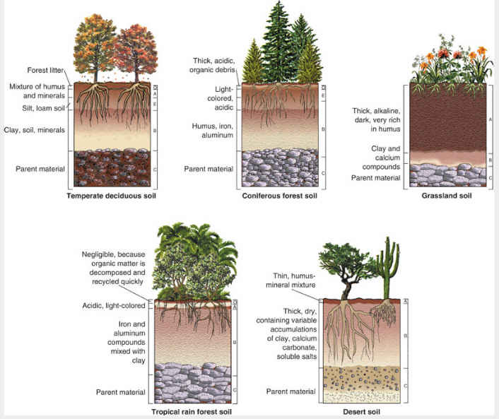 Canadian Soil Information