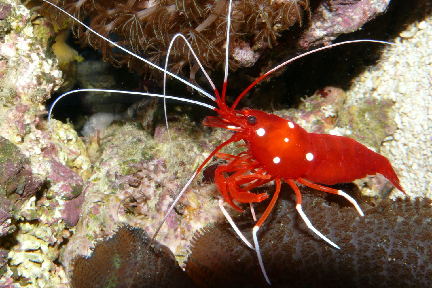 DEEP BLUE HOME: MADE IN THE OCEAN: SHRIMPS
