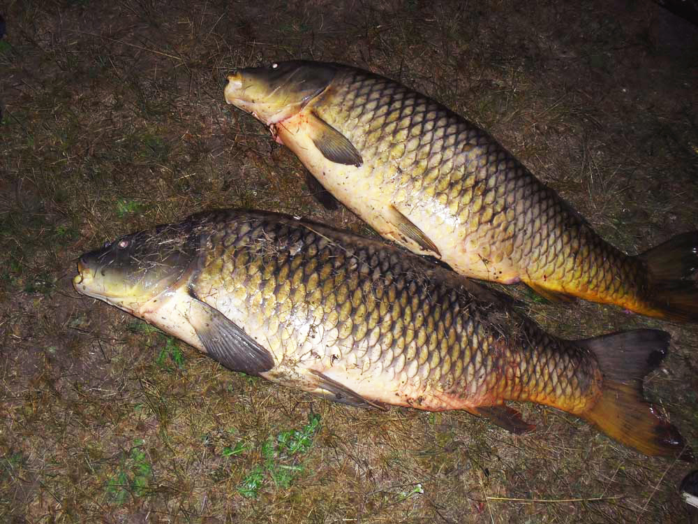 когда ловится рыба по лунному календарю