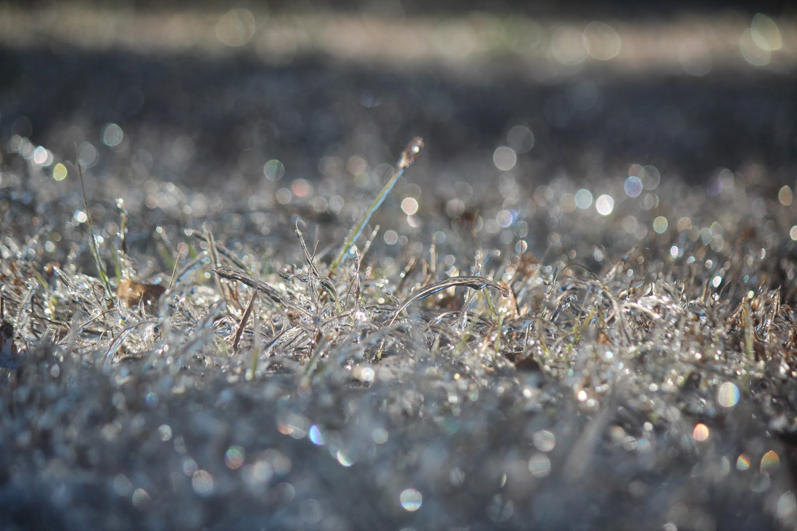 Icy lawn in Pensacola, FL covered with Ice Crystals