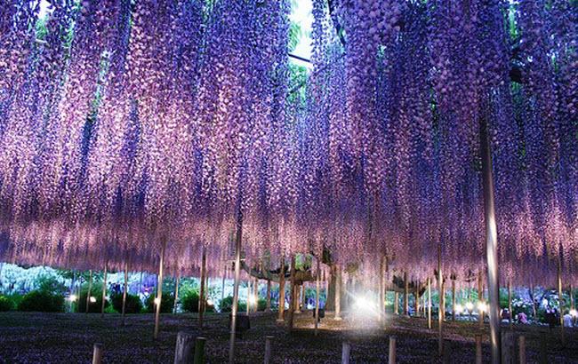 شلالات الزهور اليابانية Water_Fall_Flowers_Japan_15.jpg