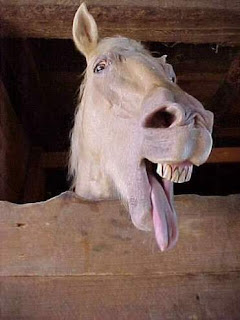 horse pictures funny