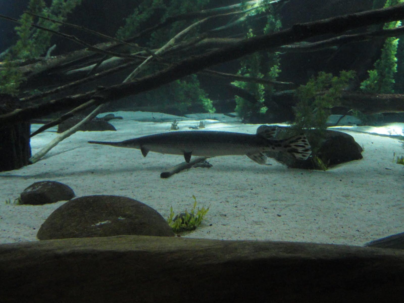 Better Than A Travel Guide Sea Life Aquarium