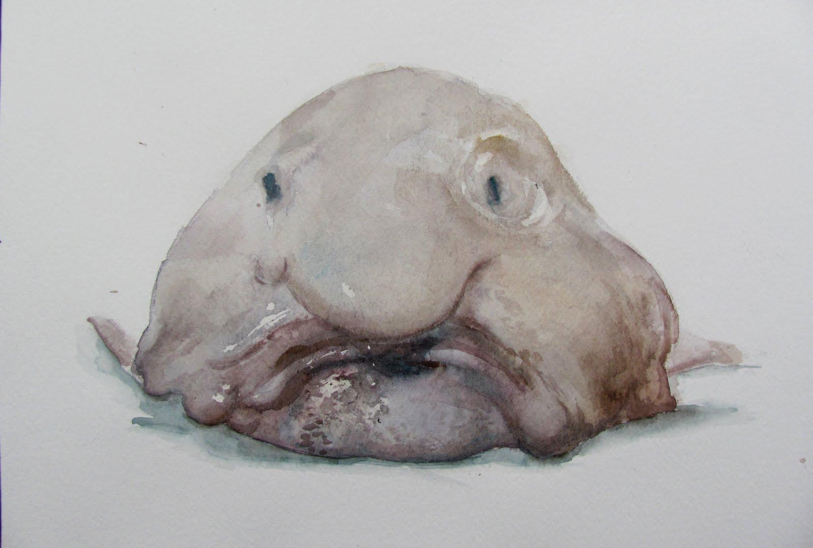 blob fish interesting facts