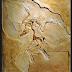 P-91 El fósil de Archaeopteryx, uno de los descubrimientos paleontológicos más importantes ...