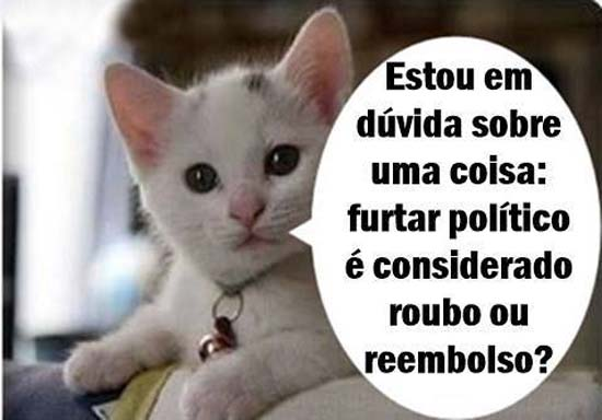 Frases para Facebook divertidas gato do face