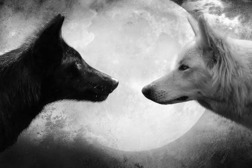 O Lobo Que Vive Dentro De Nós