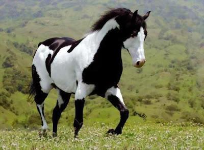 Beautiful Horse - exnim.com