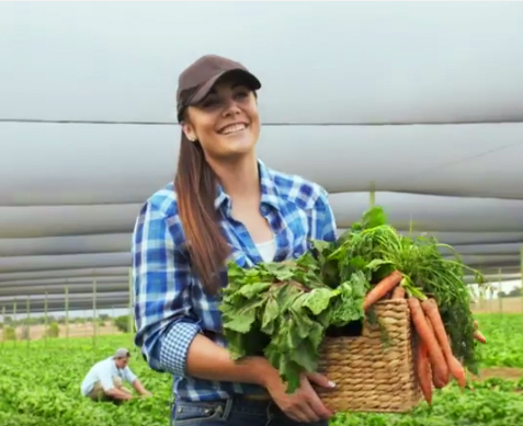 image of a young woman carrying a basket of carrots walking through a farm.