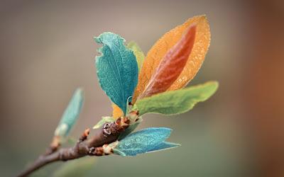 hojas de color naturaleza