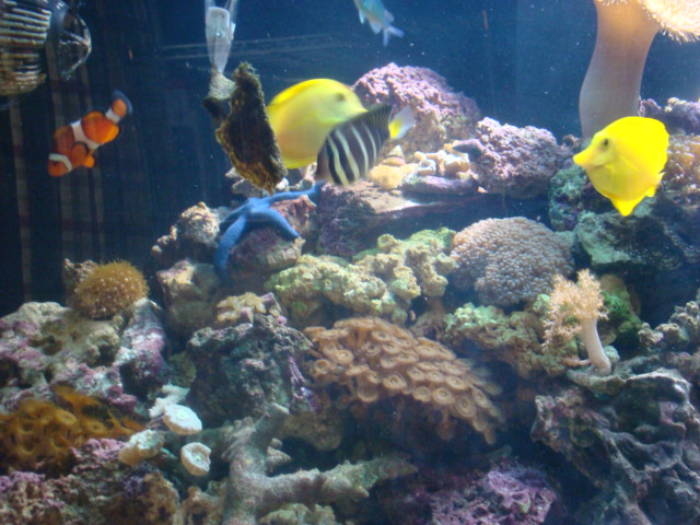 Saltwater fish kansas city online kansas city best for Fish to buy