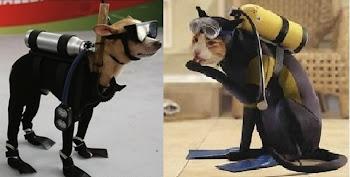 Mergulhadores  profissionais