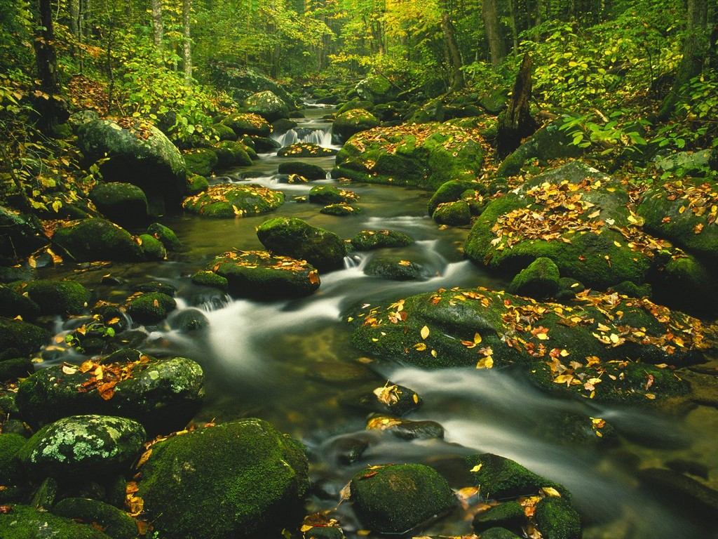 Great smoky mountains national park great smoky mountains for Roaring fork smoky mountains