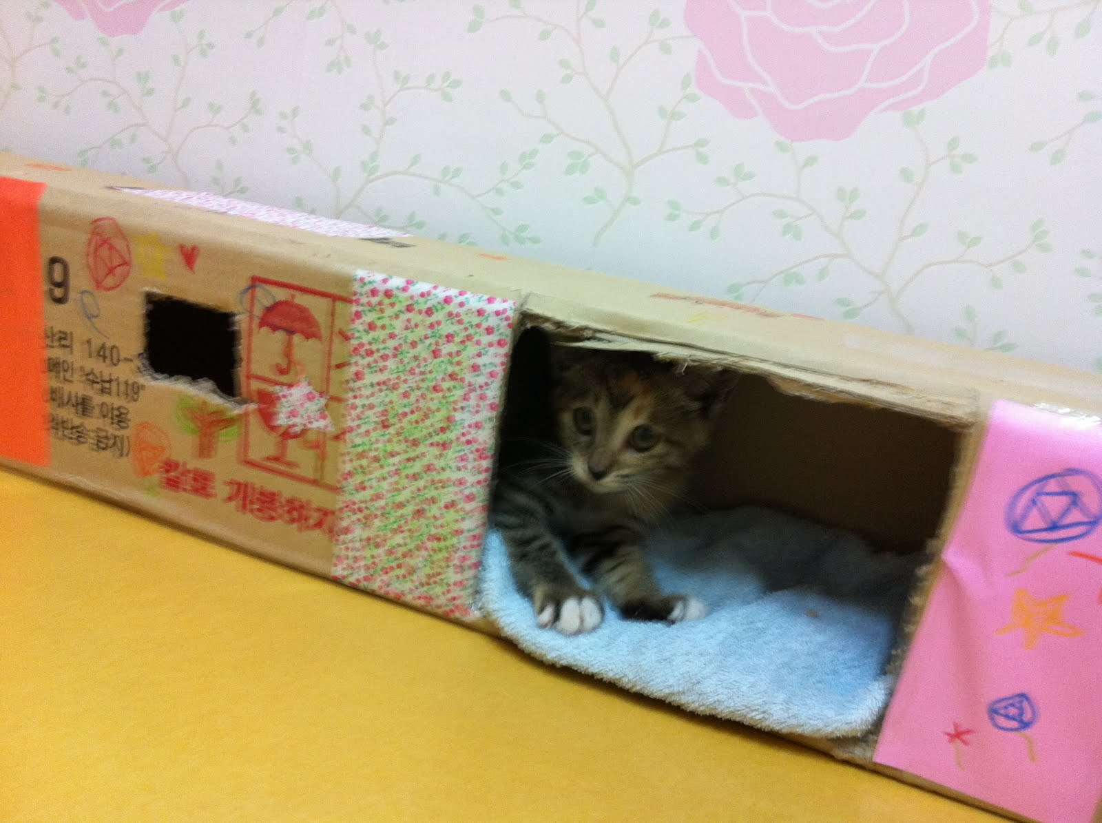 The cat obliged. She ran through the box, jumped out one of the