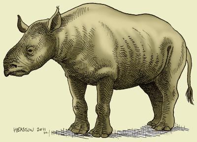 Rhinocerotidae extintos Trigonias