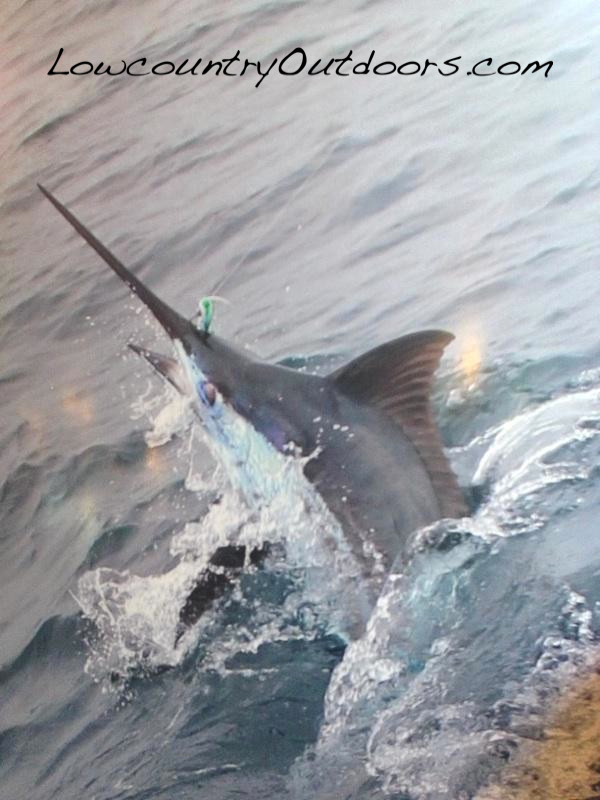 Lowcountry outdoors lowcountry saltwater fishing report for South carolina saltwater fishing