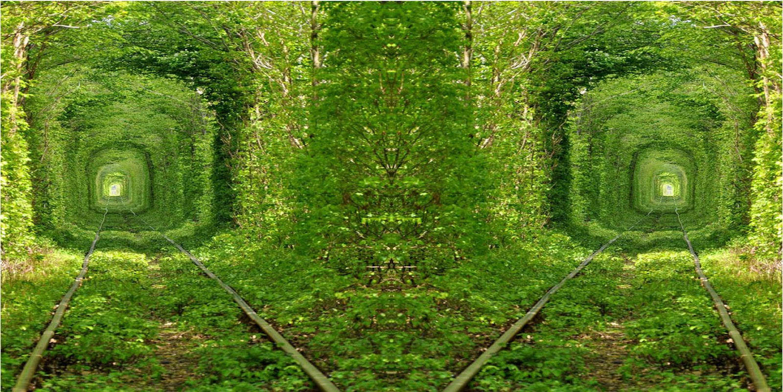 Beautiful Green Tunnel Nature Jungle Background HD Wallpapers Widescreen