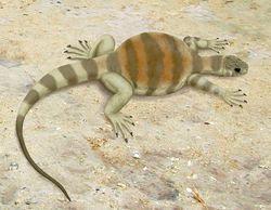 repitles prehistoricos Eunotosaurus