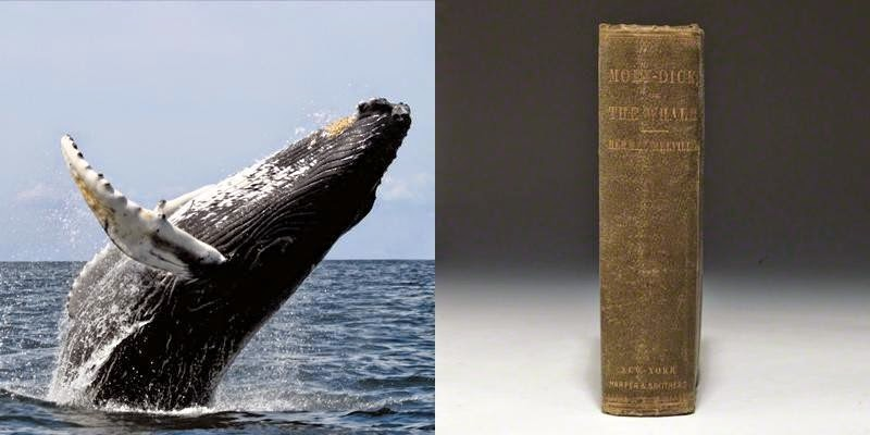 Unbelievable...These 23 Mind Blowing Facts Will DESTROY Your Understanding Of Time - There are whales alive today who were born before Moby Dick was written.