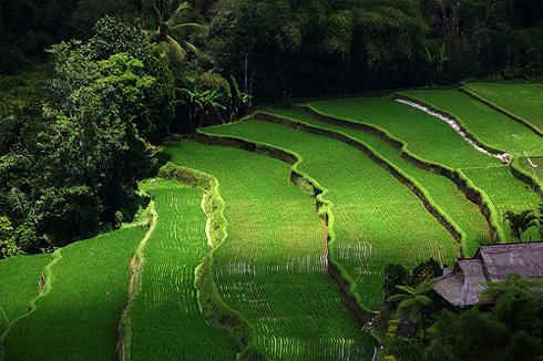 Tegalalang Bali Landscape