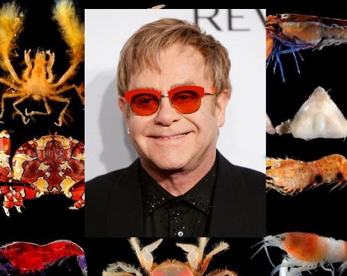 crustacean species named after elton john