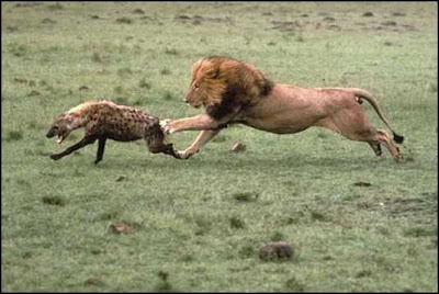 Animals Fighting
