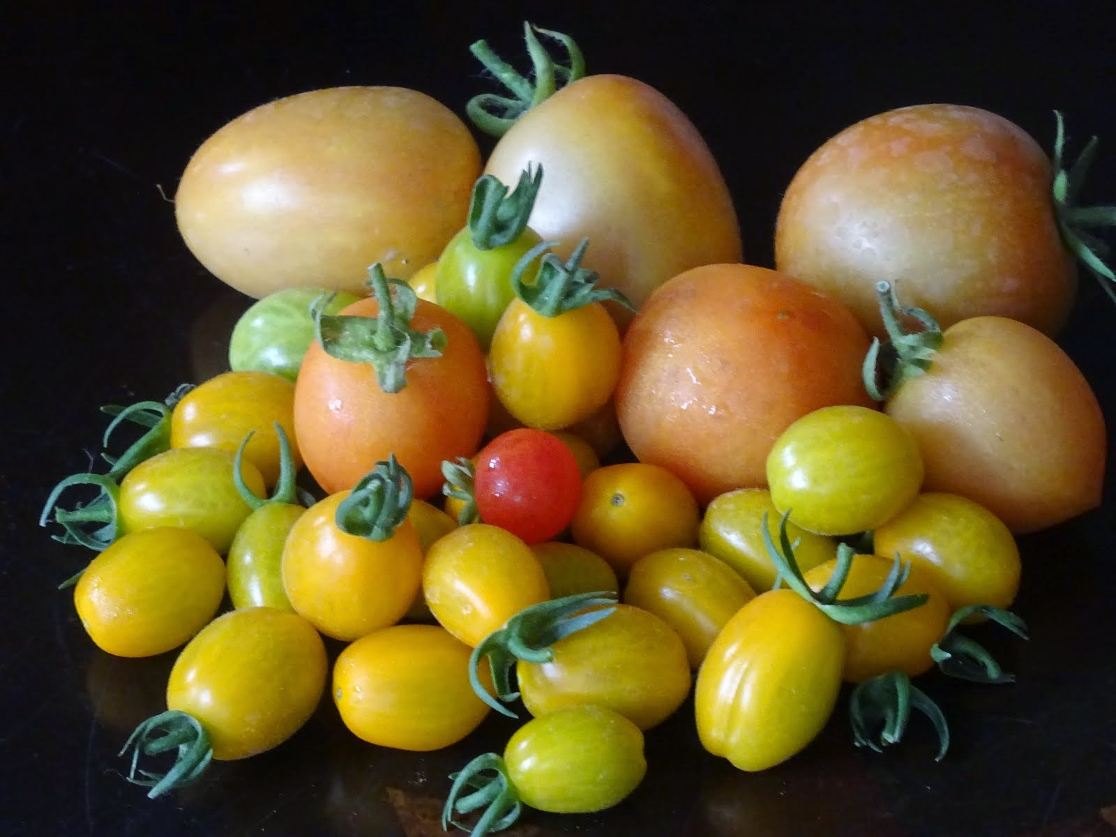 Plum &other tomatoes grown this year