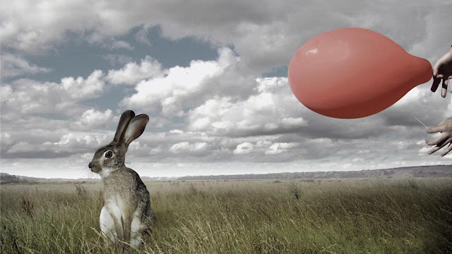 rabbit, bunny, red ballon,