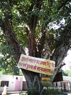 A very old tree in the premises of the Ancient Laxmi Narayan Temple along the way from Rishikesh to Haridwar