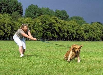 colocar correa a perro que se resiste