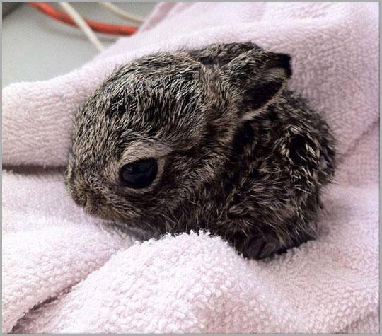 Cute Baby Bunny, Bunny, Rabbits, Baby Animals