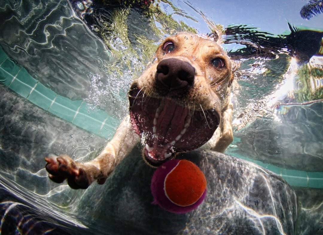 funny+dog+chasing+ball+under+water+photography+cute+pet+animal.jpg