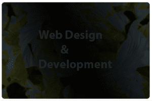 Web Design Bangladesh:   How the Web influenced design WordPress platform