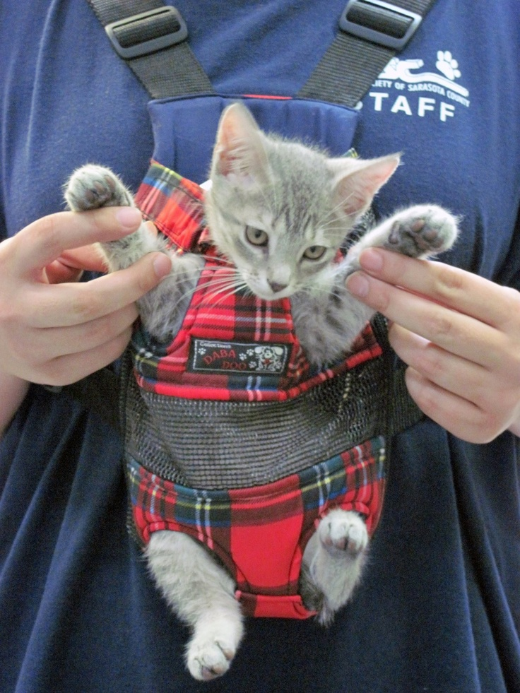 How To Put A Cat In A Pet Carrier