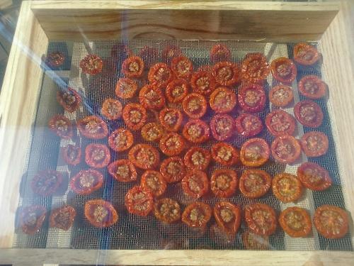 horno-solar-tomates-2